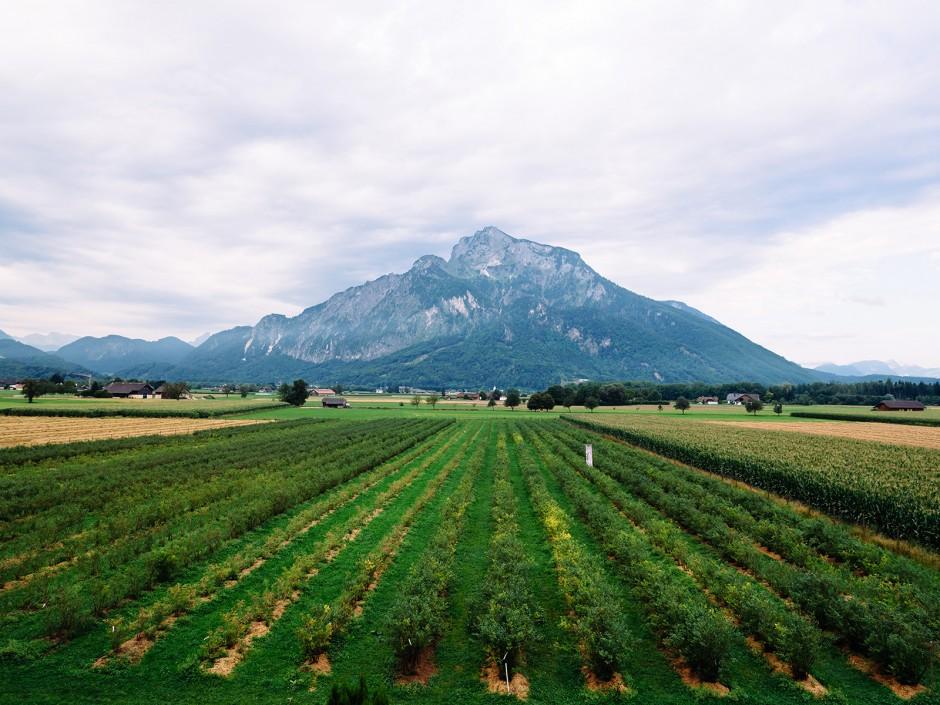 Weinregion Bergland