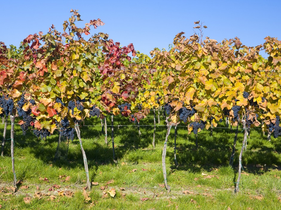 Weinregion Rosalia