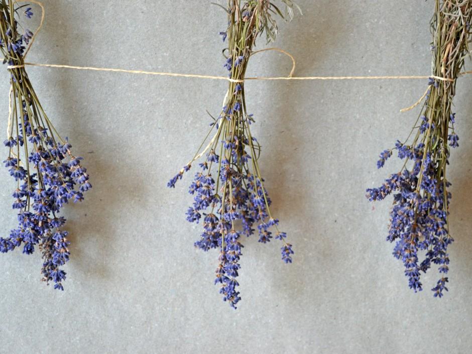 Lavendel, die Heilpflanze und ihre Verwendung