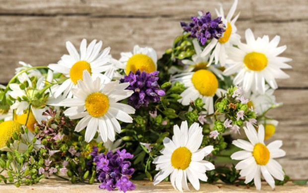 Essbare Blüten
