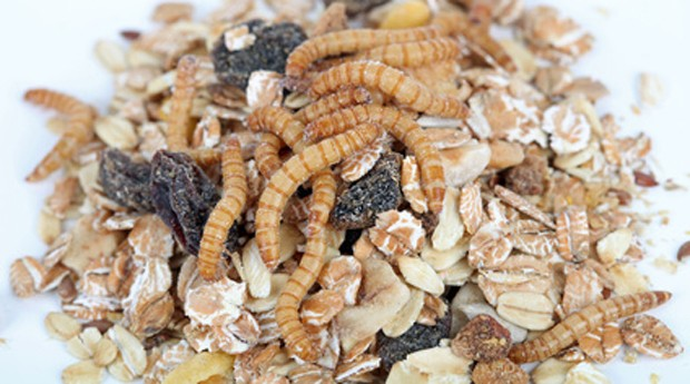 Mehlwürmer im Müsli