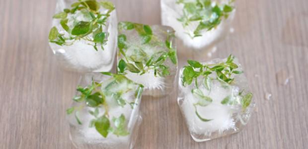 gefrorene Kräuter