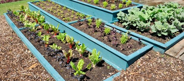 Gemüsebeete planen