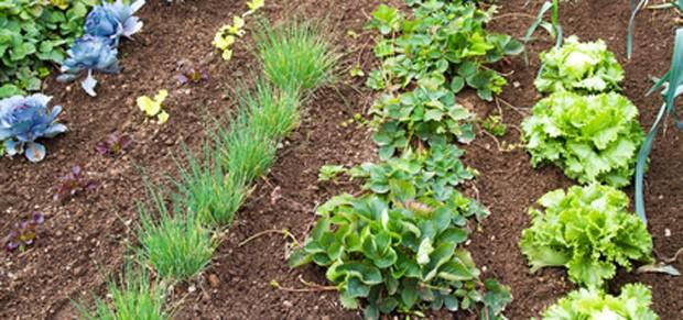 Gemüsebeet Planung