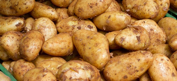 Geerntete Kartoffel