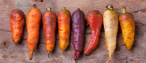 Verschiedene Karotten-Sorten