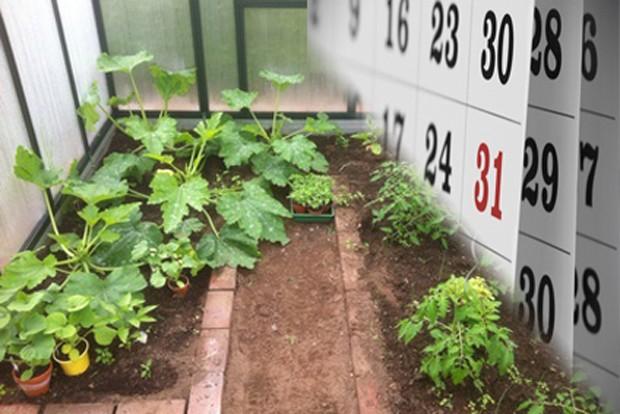 Gemüsegarten im Feber