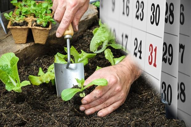 Gemüsegarten im April