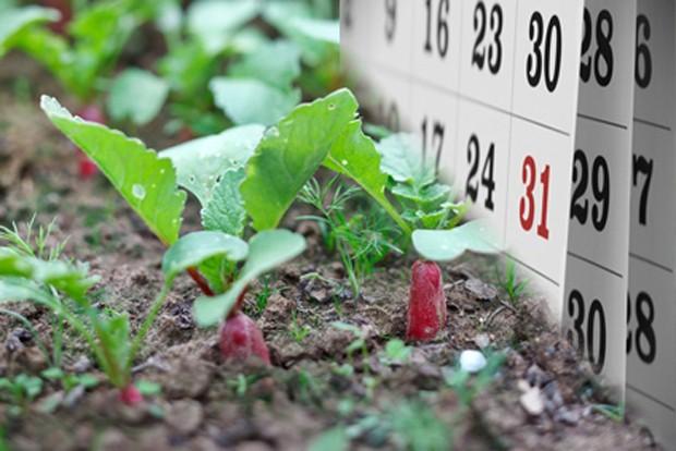 Gemüsegarten im Mai