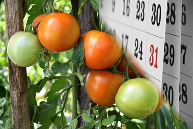 Gemüsegarten im September