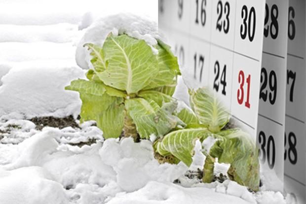 Gemüsegarten im Dezember