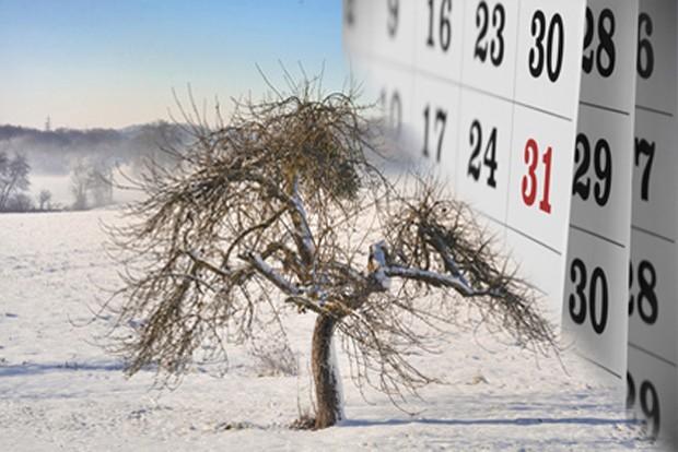 Februar Obstgarten