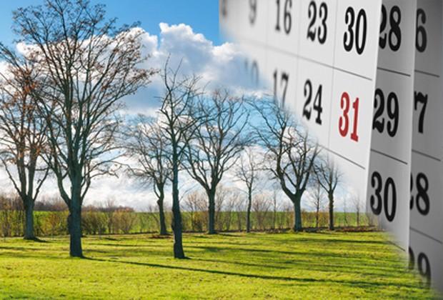 Obstgarten im März