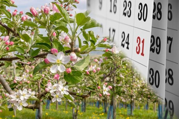 Obstgarten im Mai