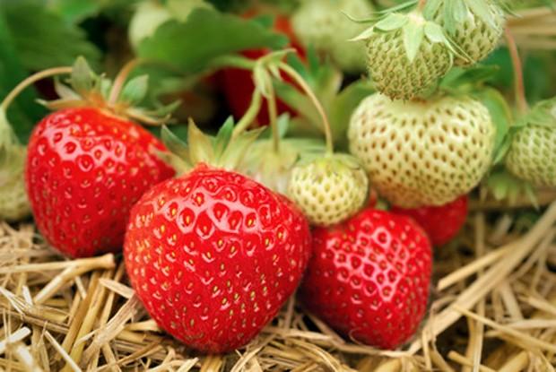 Erdbeeren im Mai