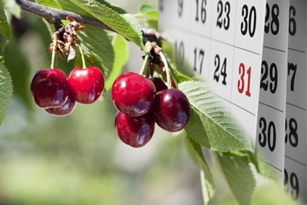 Obstgarten im Juni