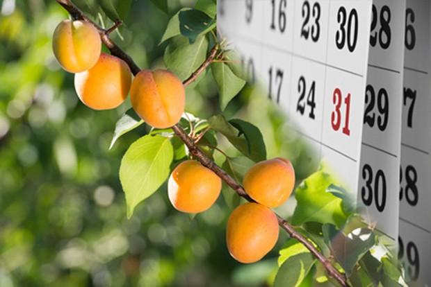 Obstgarten im Juli
