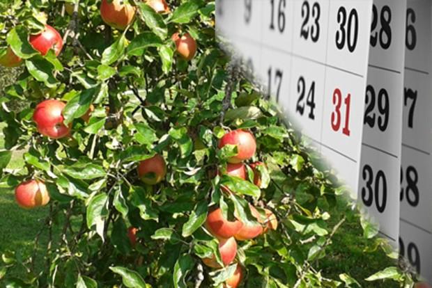 Obstgarten im Oktober