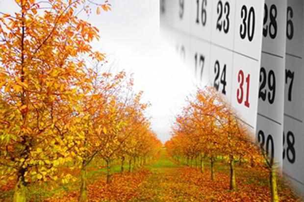Obstgarten im November