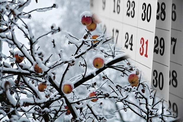 Obstgarten im Winter