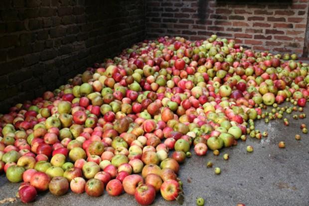 Apfellagerung