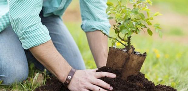 Anbau im eigenen Garten