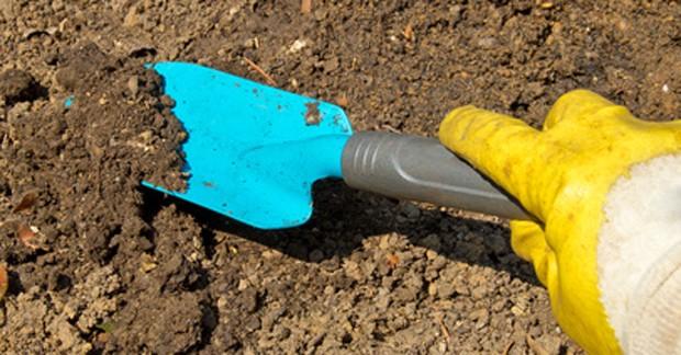 Bodenpflege unter Obstgehölzen