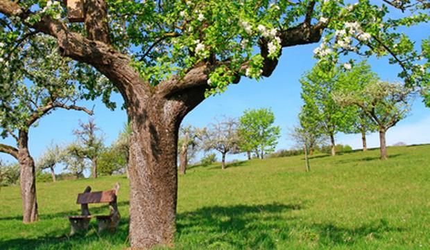 Stammpflege bei Obstbäumen