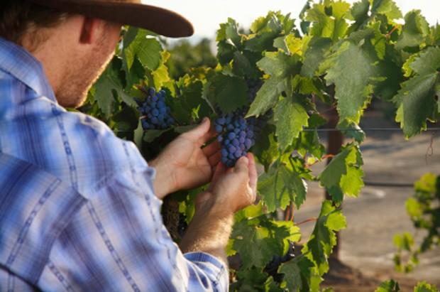 Österreichische Weine sind qualitativ hochwertige Tropfen, spielen aber preislich nicht in der obersten Liga.