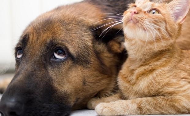 Hunde- oder Katzenkot entfernen