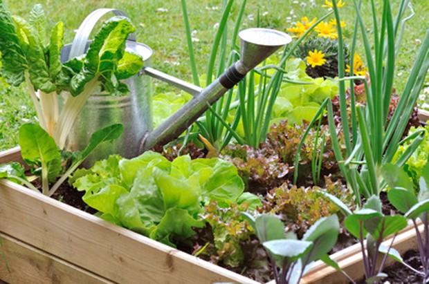 Der eigene Gemüsegarten