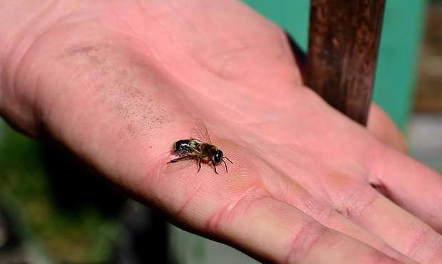 Bienen- und Insektenstiche