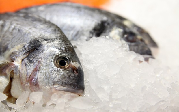 Fisch richtig lagern