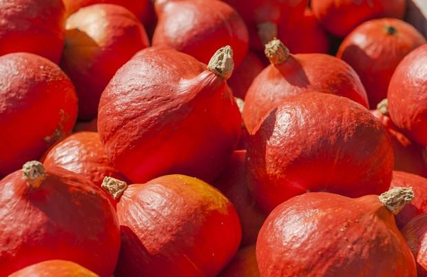 Oranger Knirps - Speisekürbis