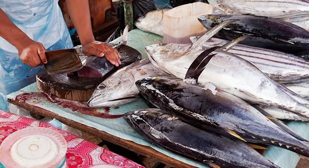 Vor allem bei rohem Fisch MUSS auf Qualität, Frische und Hygiene geachtet werden.