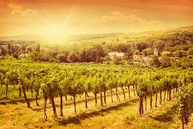 Die Weingeschichte Österreichs
