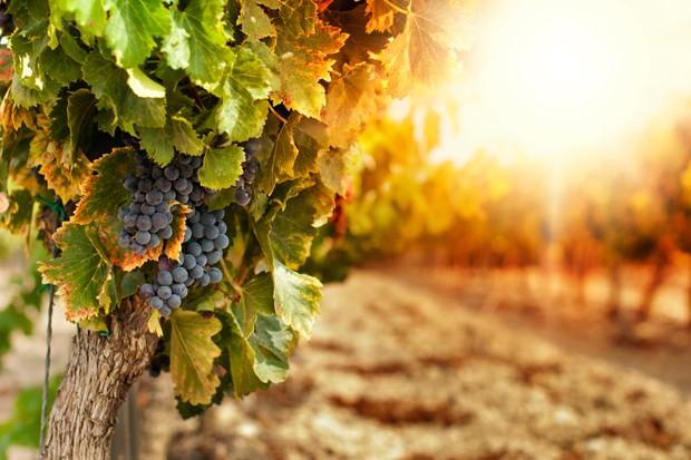 Die wechselhafte Weingeschichte