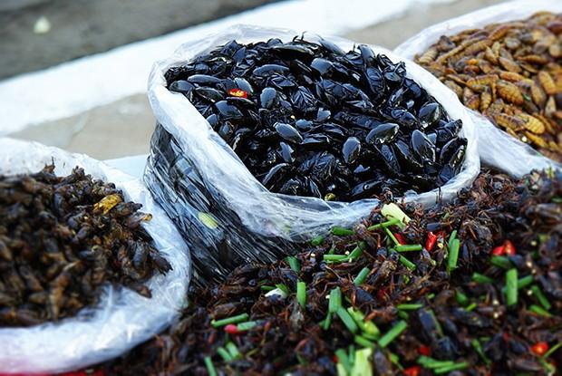 Bei über 1400 essbaren Insektenarten ist die Auswahl riesengroß.