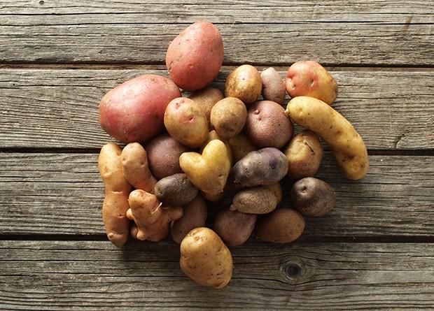Kartoffeln gibt es in vielen Formen und Farben und mit verschiedene Eigenschaften.