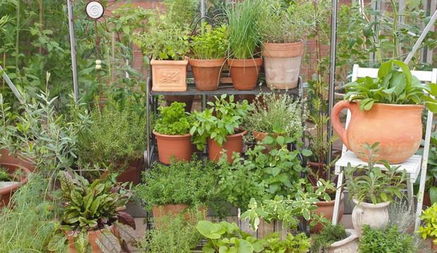 Frische Kräuter im Garten