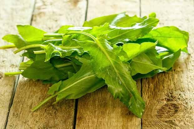 Blätter vom Sauerampfer