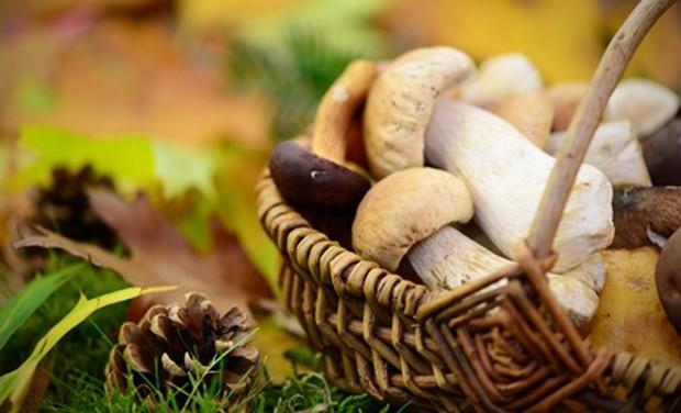 Pilze und Schwammerl