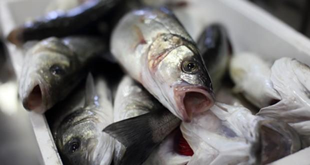 Fisch richtig aufbewahren