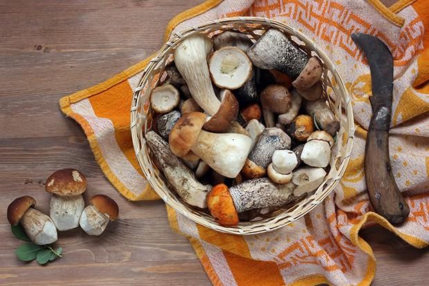Der Wald liefert uns viele essbare Früchte, Beeren und vor allem Pilze für den eigenen Gebrauch.