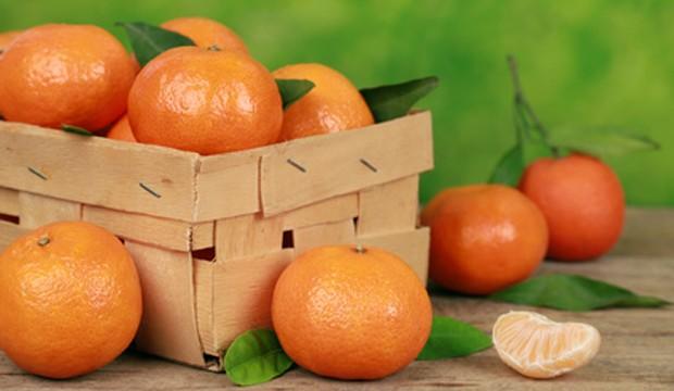 Mandarinen geerntet