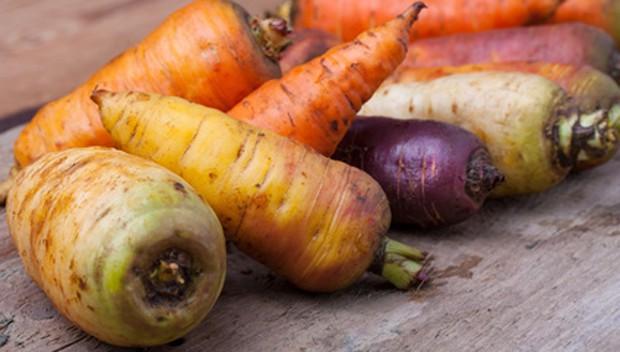 Karottenarten