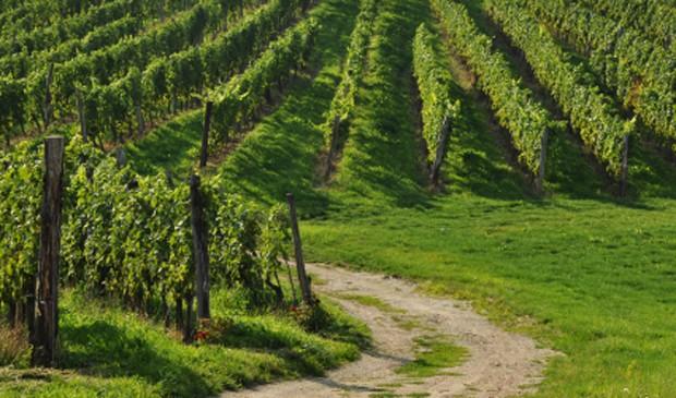 Weinregion Südoststeiermark