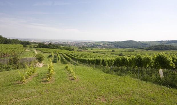 Weinregion Weinviertel