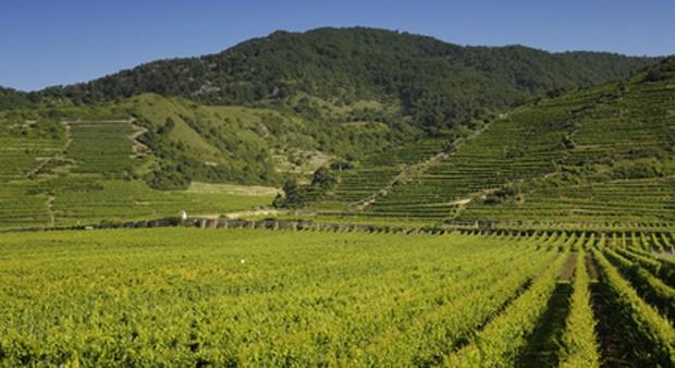 Weinregion Wachau