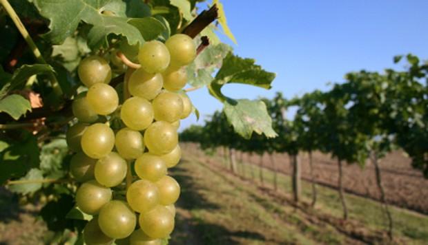 Weinregion Traisental